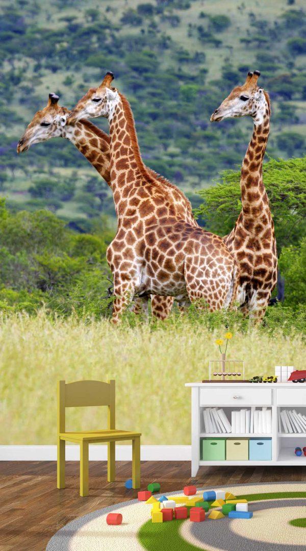 Giraffes 6' x 8' (1,83m x 2,44m)