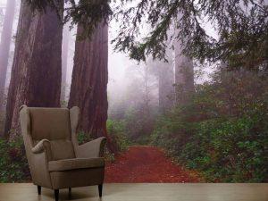 Redwood National Park, California 10.5' x 8' (3,20m x 2,44m)