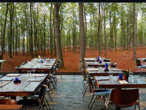 Autumn Forest 24' x 8' (7,32m x 2,44m)