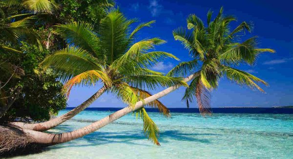 Palm Trees in Maldives Island Custom Mural 4,3m wide by 2,4m high