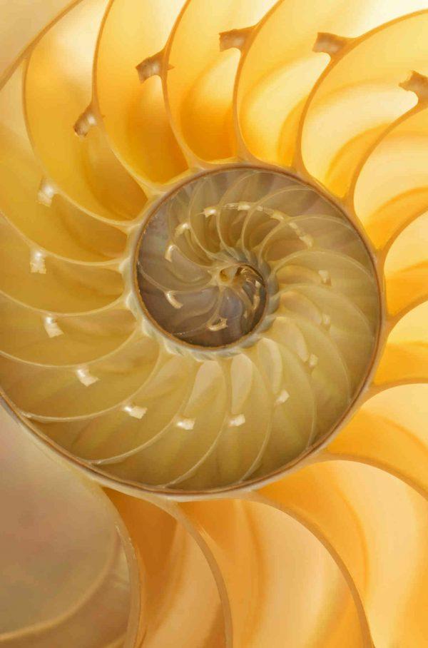 Nautilus 6' x 9' (1,83m x 2,75m)