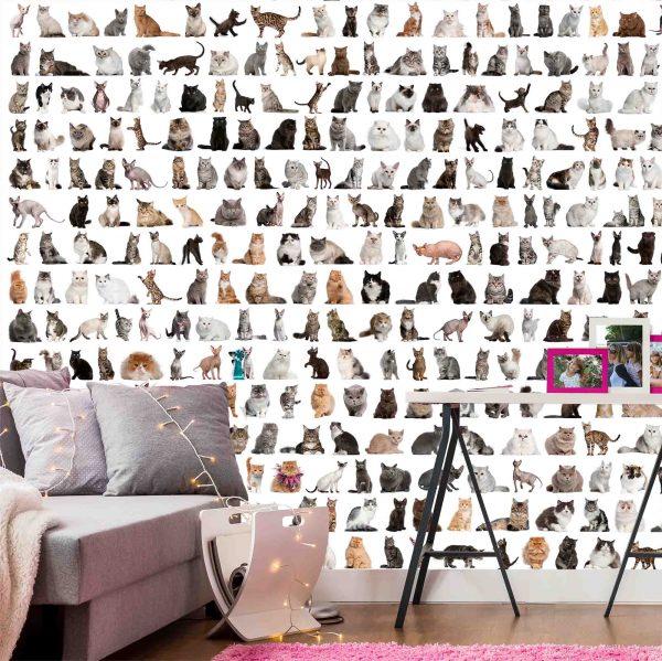 Cats 7.5' x 8' (2,29m x 2,44m)