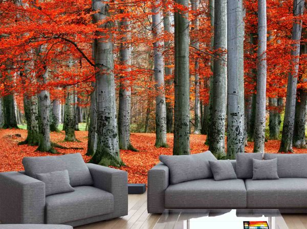 Red Forest 12' x 8' (3,66m x 2,44m)
