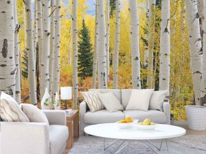 Aspen Forest, Elk Mountains, Colorado 12' x 8' (3,66m x 2,44m)
