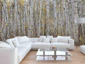 Infinite Birch Forest 15' x 8' (4,57m x 2,44m)
