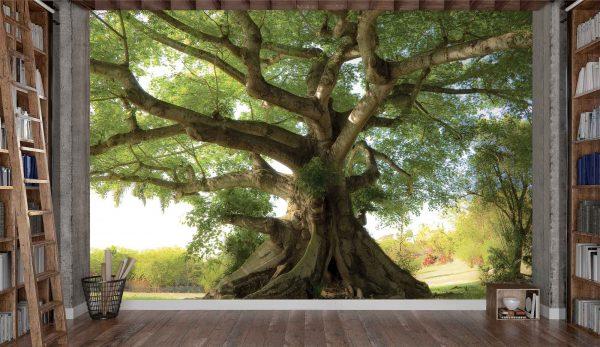 Kapok Tropical Tree 12' x 8' (3,66m x 2,44m)