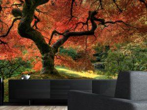Japanese Maple Tree 13.5' x 9' (4,11m x 2,75m)