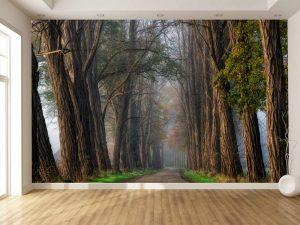 Acacia Road 12' x 8' (3,66m x 2,44m)
