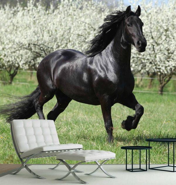Black Stallion 9' x 9' (2,75m x 2,75m)
