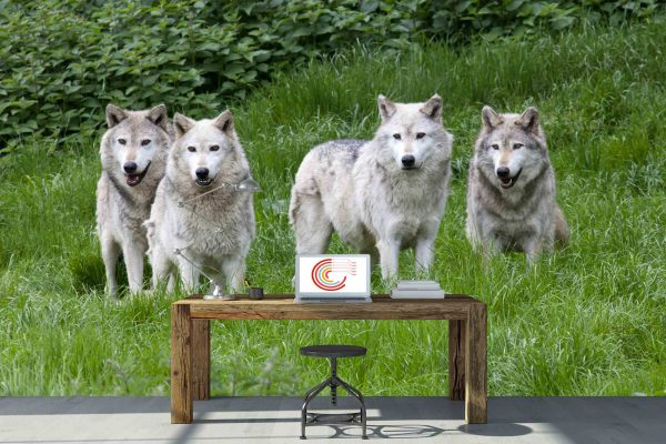 Pack of Grey Wolves 13.5' x 8' (4,11m x 2,44m)