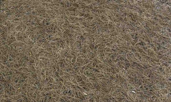 Pine Needles 13.5' x 8' (4,11m x 2,44m)