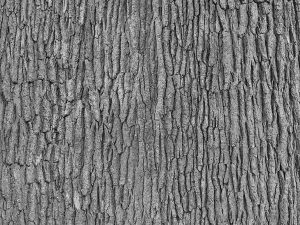 Grey Tree Bark 6' x 8' (1,83m x 2,44m)