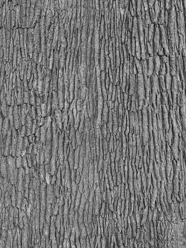 Grey Tree Bark 6' x 8' (1,83m x 2,44m)