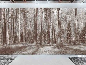 Panoramic Fir Forest (Sepia) 30' x 9' (9,14m x 2,75m)