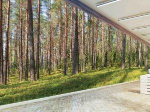 Panoramic Fir Forest 36' x 10' (11,00m x 3,05m)