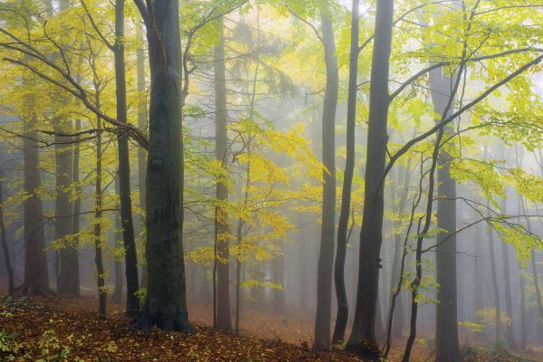 Autumn Morning in the Fog  12' x 8' (3,66m x 2,44m)