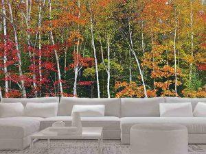 Autumn Birch Forest 24' x 8' (7,32m x 2,44m)