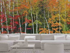 Autumn Birch Forest 24' x 8' (7,32m x 2,44m)
