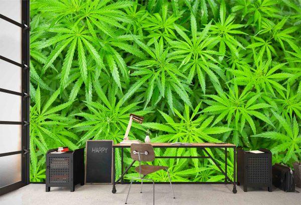 Cannabis 12' x 8' (3,66m x 2,44m)