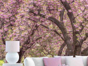 Cherry Blossoms, Central Park, Manhattan, New York 6' x 8' (1,83m x 2,44m)