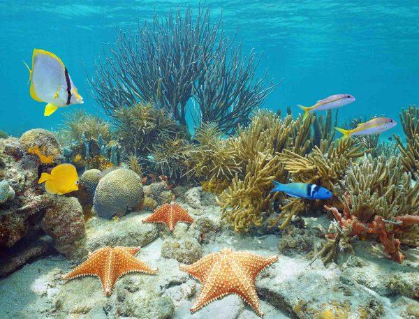 Under the Sea 10.5' x 8' (3,20m x 2,44m)