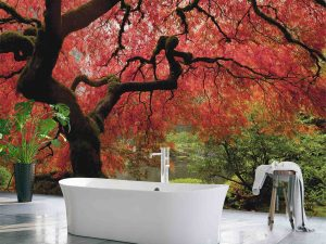 Japanese Maple 12' x 8' (3,66m x 2,44m)