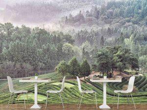Green Tea Plantation 12' x 8' (3,66m x 2,44m)