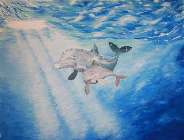 Dolphins 10.5' x 8' (3,20m x 2,44m)